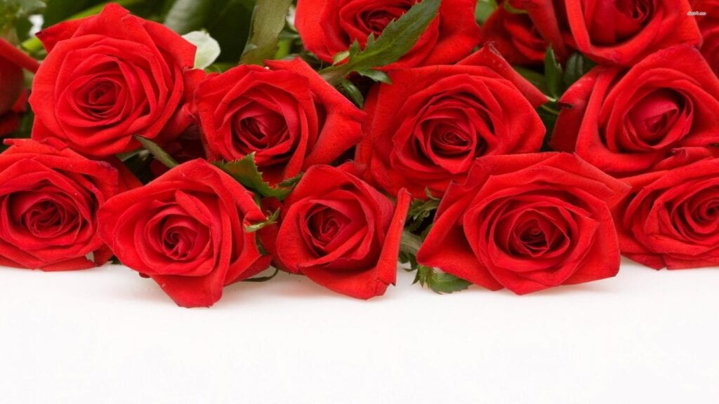 1600x900-data-wallpapers-39-red-rose-639798-2560x1600-hq-dsk-wallpapers